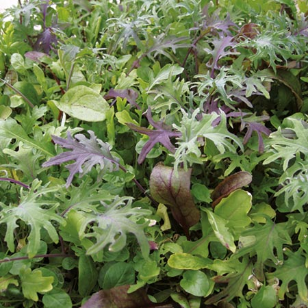 Leaf Salad Californian Mix Speedy Seeds